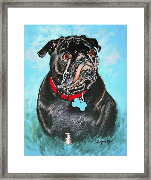 Smug Black Pug Framed Print