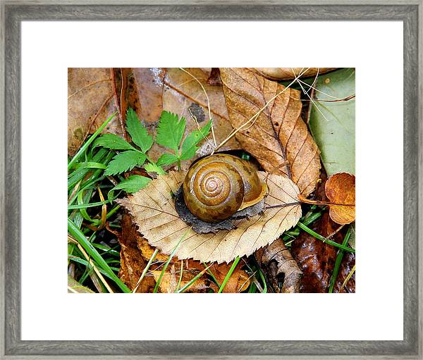Snail Home Framed Print
