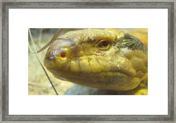 Snake Eye Framed Print