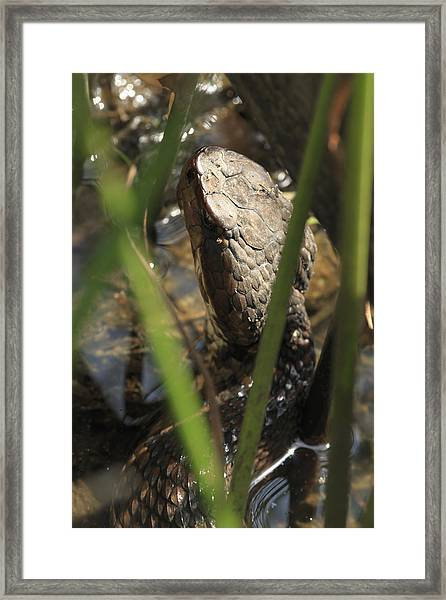 Snake In The Water Framed Print