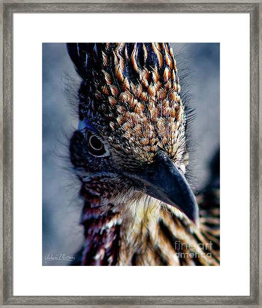 Snake Killer Framed Print