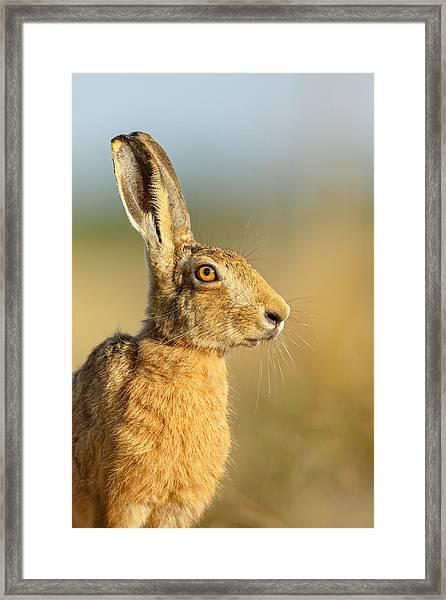 Snooty Framed Print