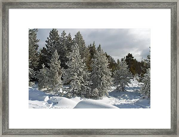 Snow And Ice Covered Evergreens At Sunset Lake  Framed Print
