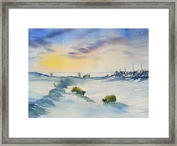 Snow And Sheep On The Moors Framed Print