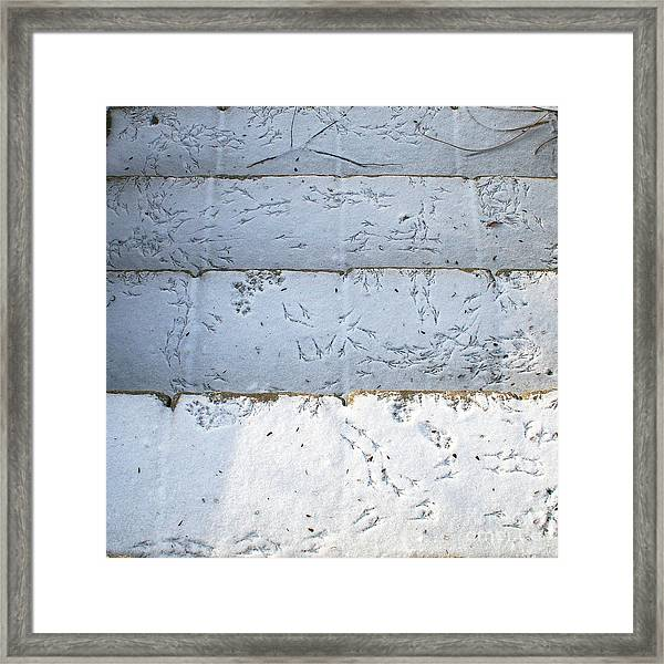 Snow Bird Tracks Framed Print