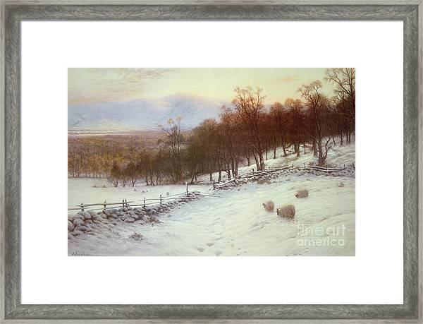Snow Covered Fields With Sheep Framed Print