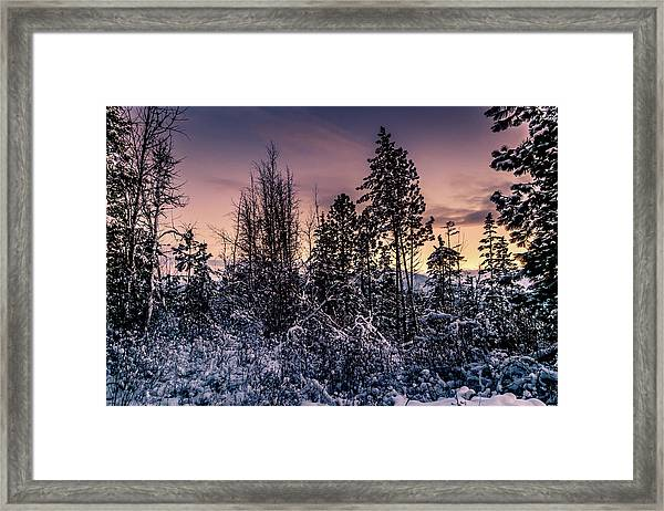 Snow Covered Pine Trees Framed Print