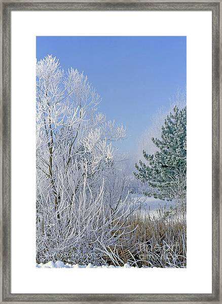 2a357 Snow Covered Trees At Alum Creek State Park Framed Print