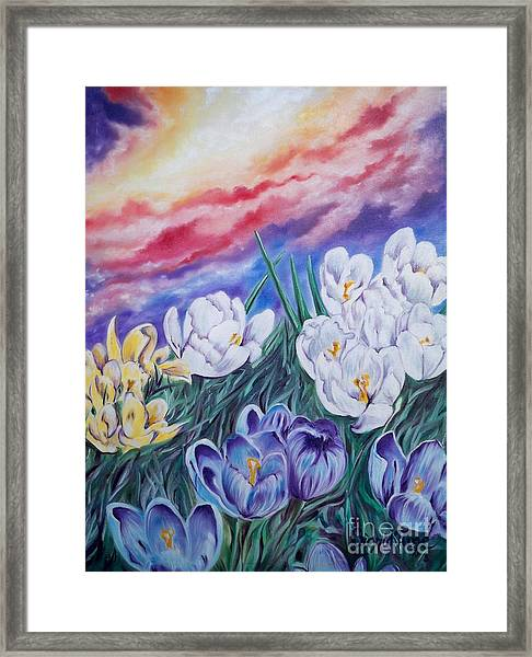 Flygende Lammet Productions      Snow Crocus Framed Print
