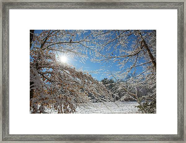 Snow Day Framed Print by Jim Neal