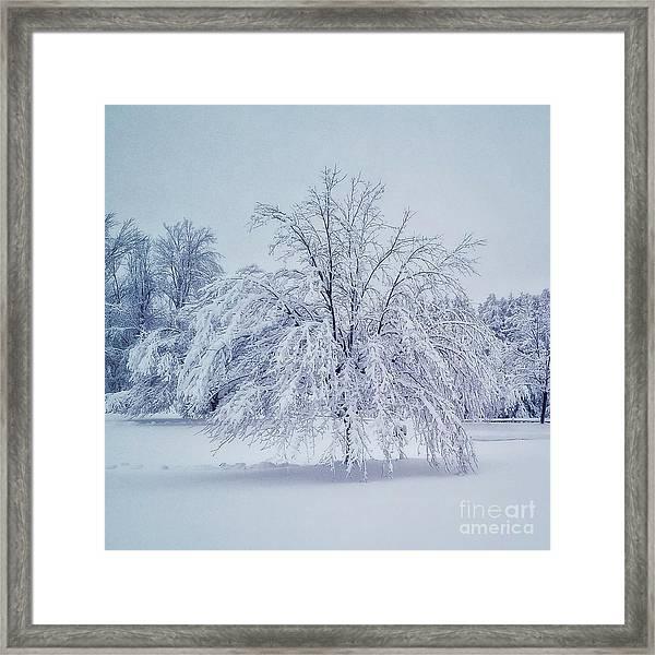 Snow Encrusted Tree Framed Print