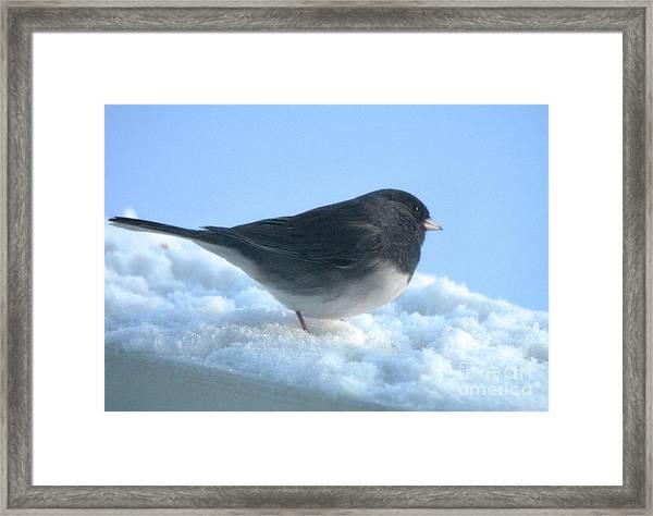 Snow Hopping #1 Framed Print