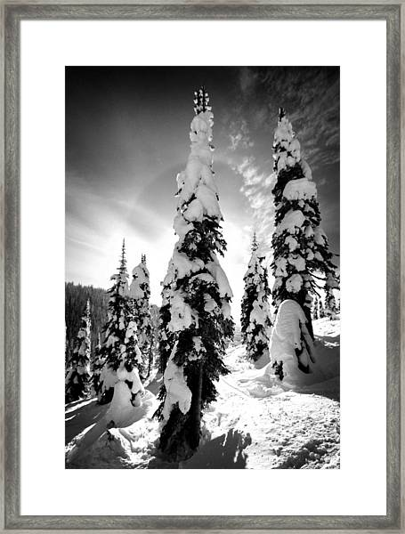 Snow Laden Tree Framed Print