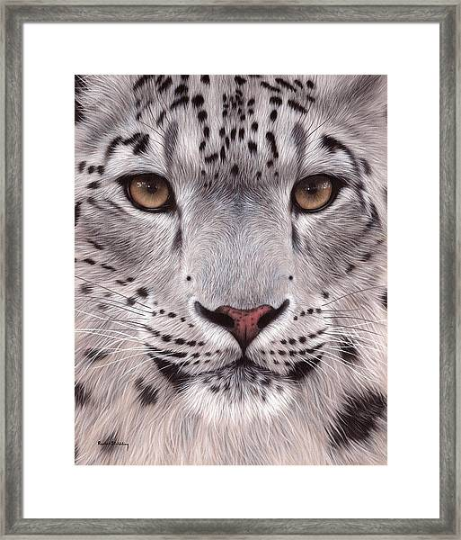Snow Leopard Face Framed Print