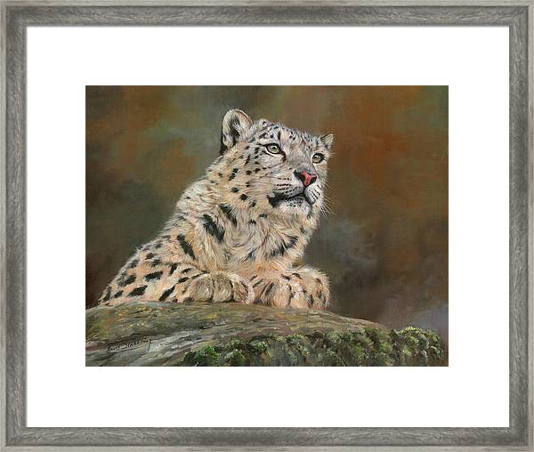 Snow Leopard On Rock Framed Print