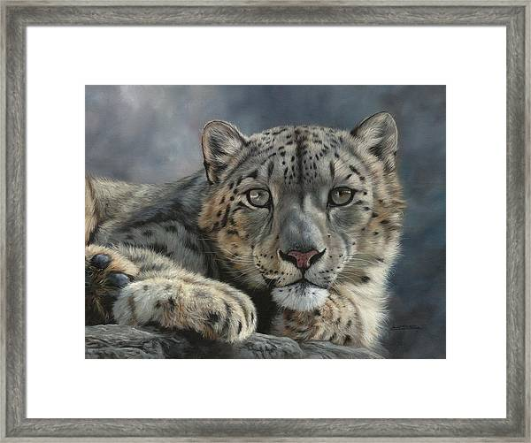 Snow Leopard Portrait Framed Print