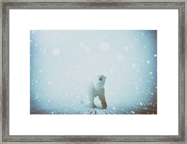 Snow Patrol Framed Print