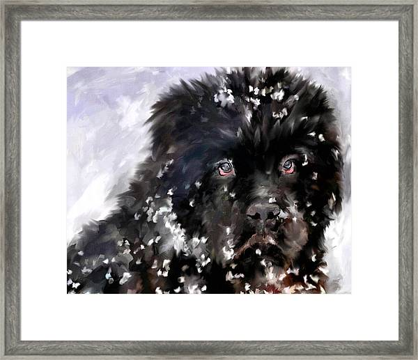 Snow Play Framed Print