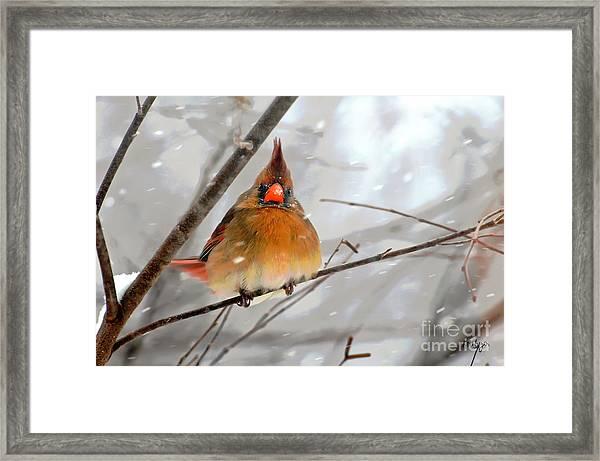 Snow Surprise Framed Print