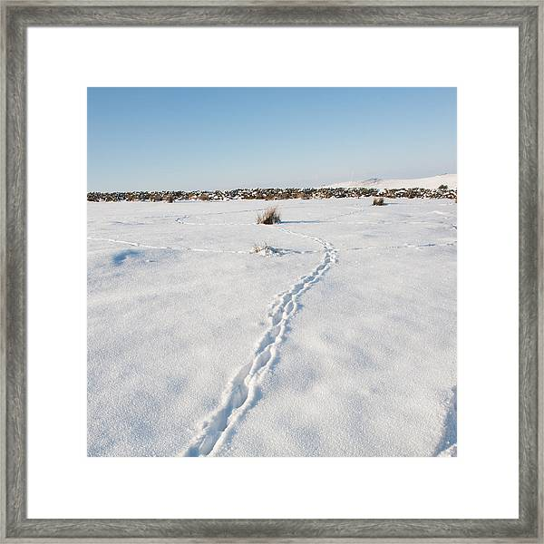 Snow Tracks Framed Print
