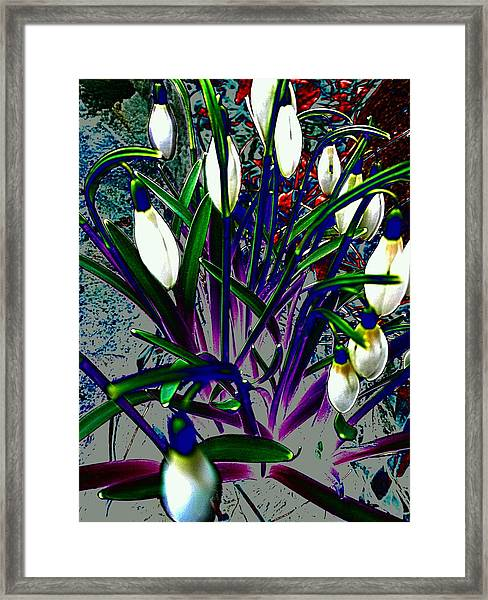 Snowdrops In Abstract  Framed Print