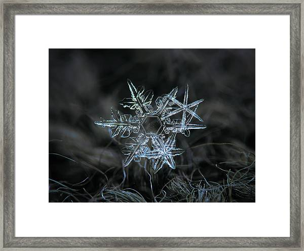 Snowflake Of 19 March 2013 Framed Print