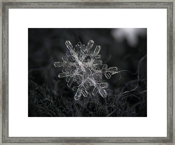 Snowflake Photo - January 18 2013 Grey Colors Framed Print