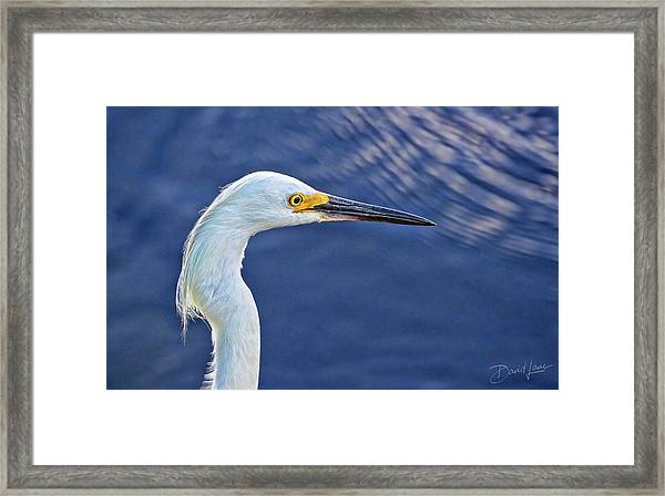 Framed Print featuring the photograph Snowy Egret Head by David A Lane