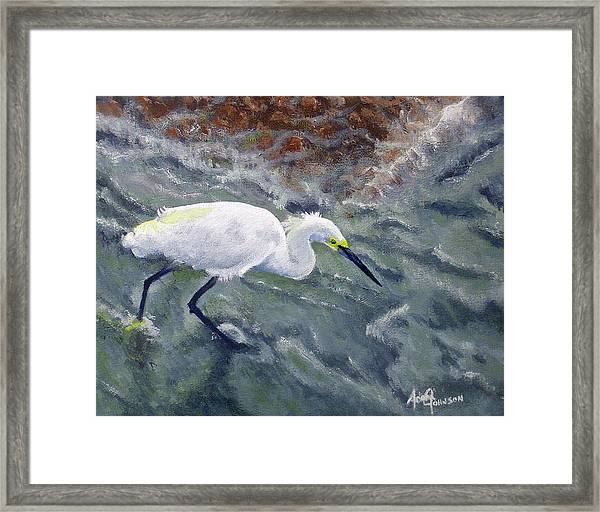 Snowy Egret Near Jetty Rock Framed Print
