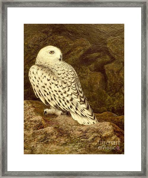 Snowy Owl Framed Print by Marc Dmytryshyn