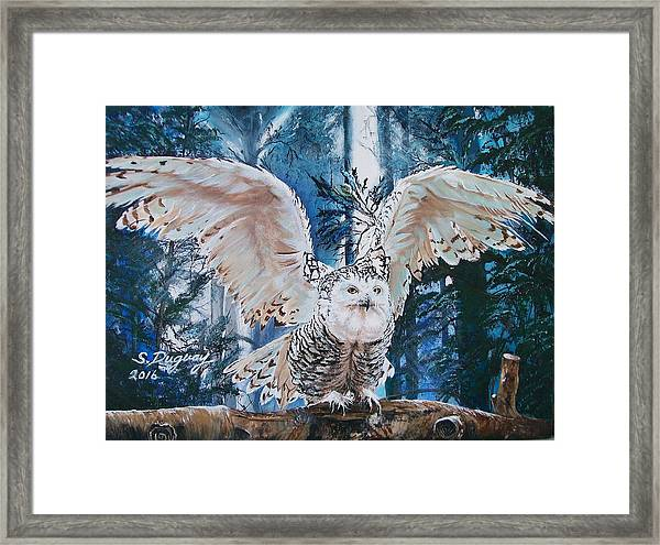 Snowy Owl On Takeoff  Framed Print