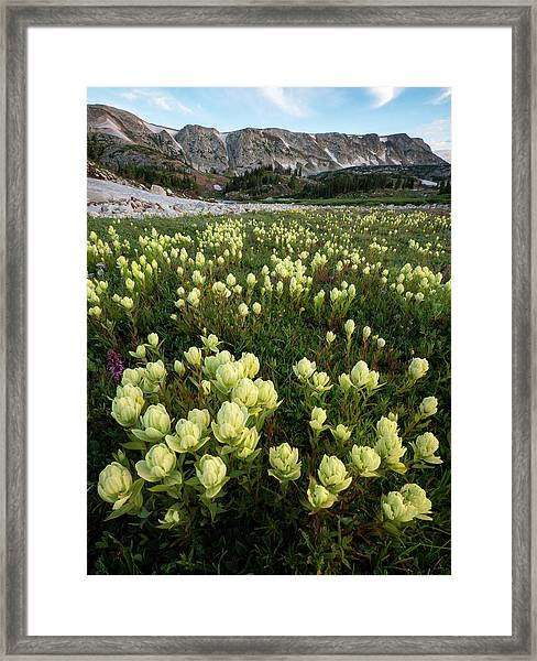 Snowy Range Paintbrush Framed Print