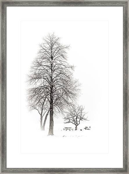 Snowy Trees Framed Print