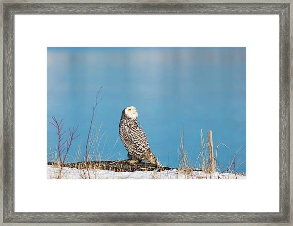 Snowy Watching A Plane Framed Print