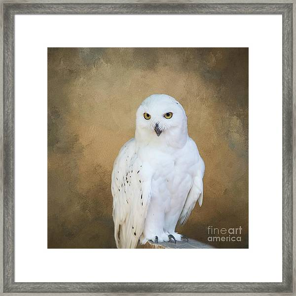 Snowy White Framed Print