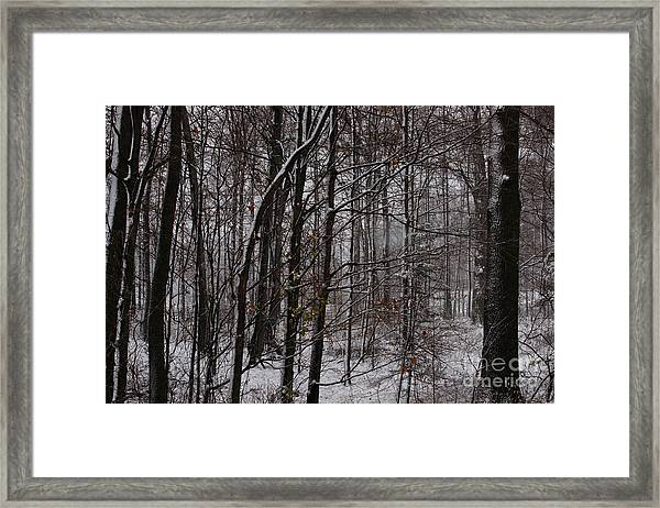 Snowy Woods Framed Print