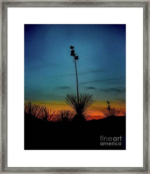 Soaptree Yucca At Sunset Framed Print