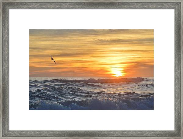 Soaring High Framed Print