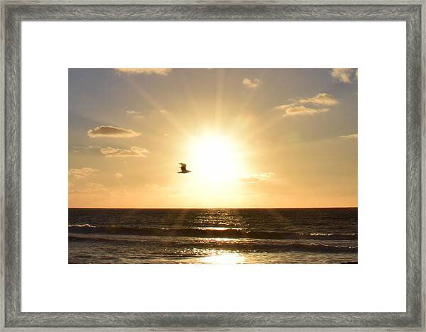 Soaring Seagull Sunset Over Imperial Beach Framed Print