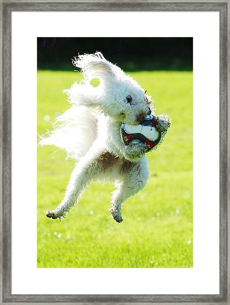 Soccer Dog-3 Framed Print