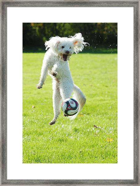 Soccer Dog-5 Framed Print
