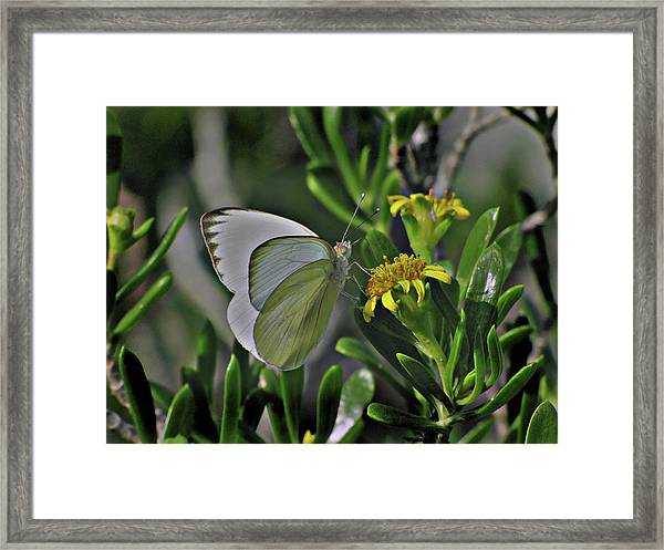 Soft As A Leaf Framed Print
