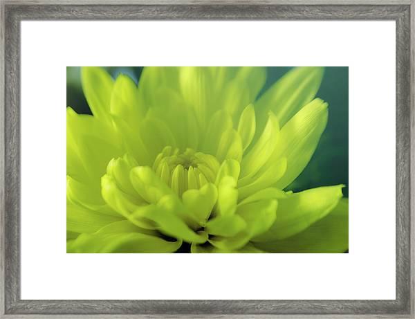 Soft Center Framed Print