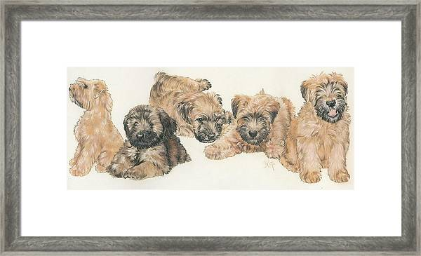 Soft-coated Wheaten Terrier Puppies Framed Print