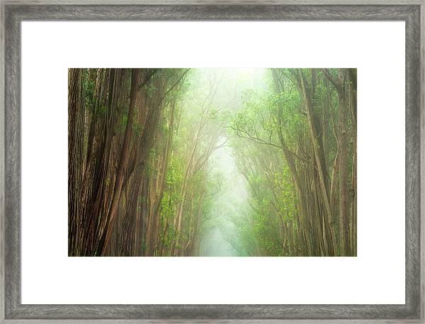 Soft Forest Light Framed Print