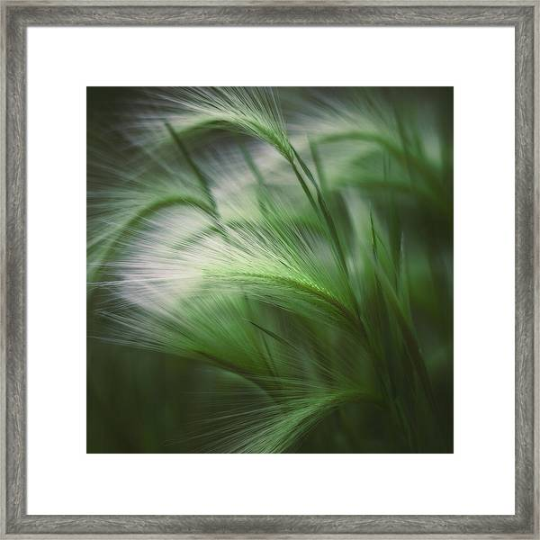 Soft Grass Framed Print