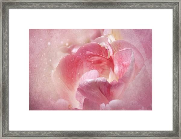 Soft Pink Tulips Framed Print