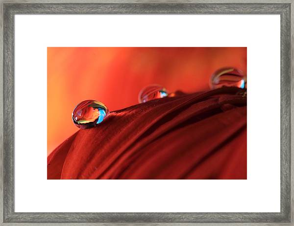 Soft Red Petals With Water Drops Framed Print