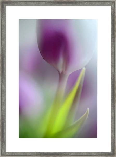 Soft Secrets Framed Print