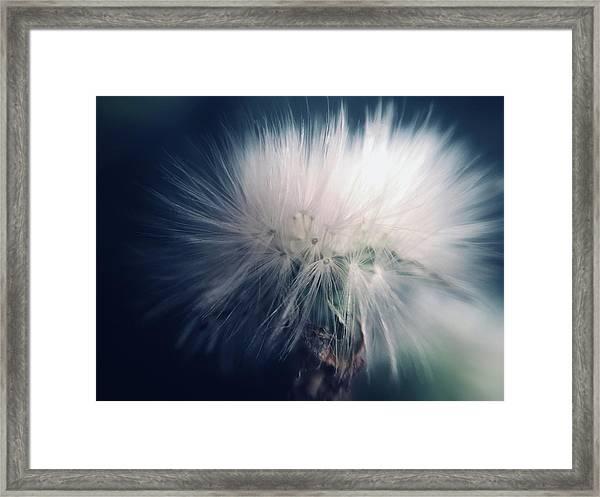Soft Shock Framed Print